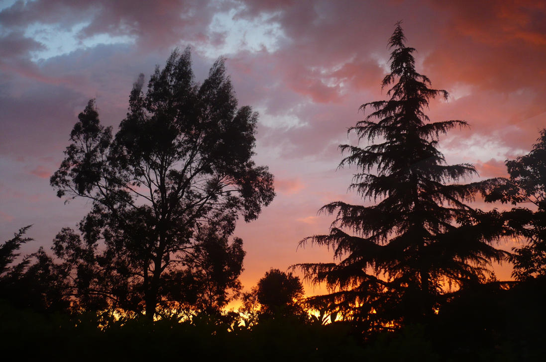Pink Evening by nicolapin