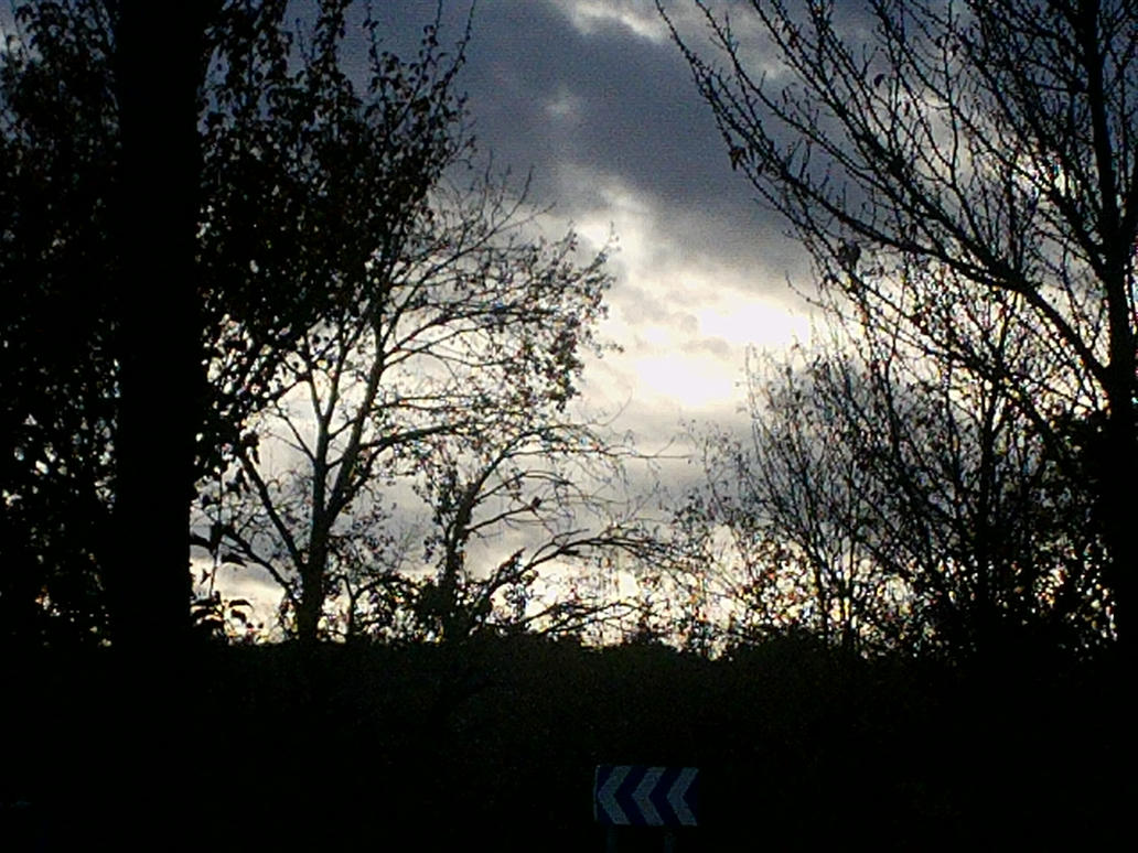autumn sky and trees by nicolapin