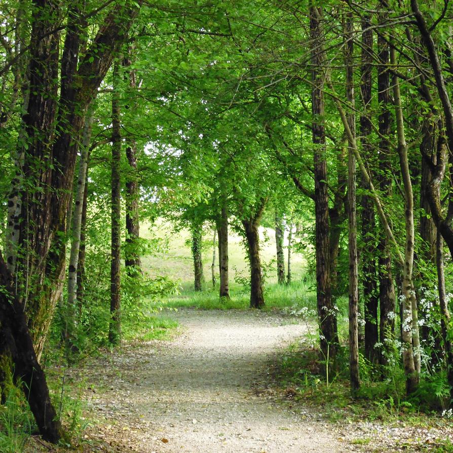 un samedi dans les bois by nicolapin