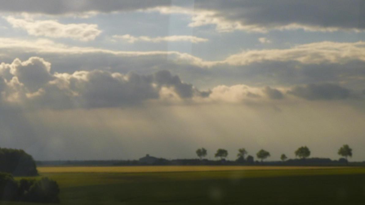 le ciel donne sa force aux arbres by nicolapin