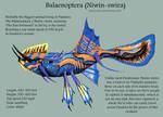 Balaenoptera Niwin-swira