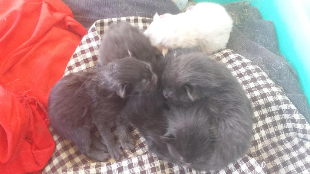 Kittens by missmjwilson