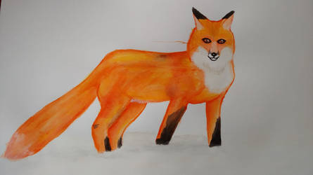 Watercolour Red Fox