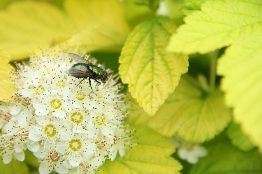 A Spring Fly