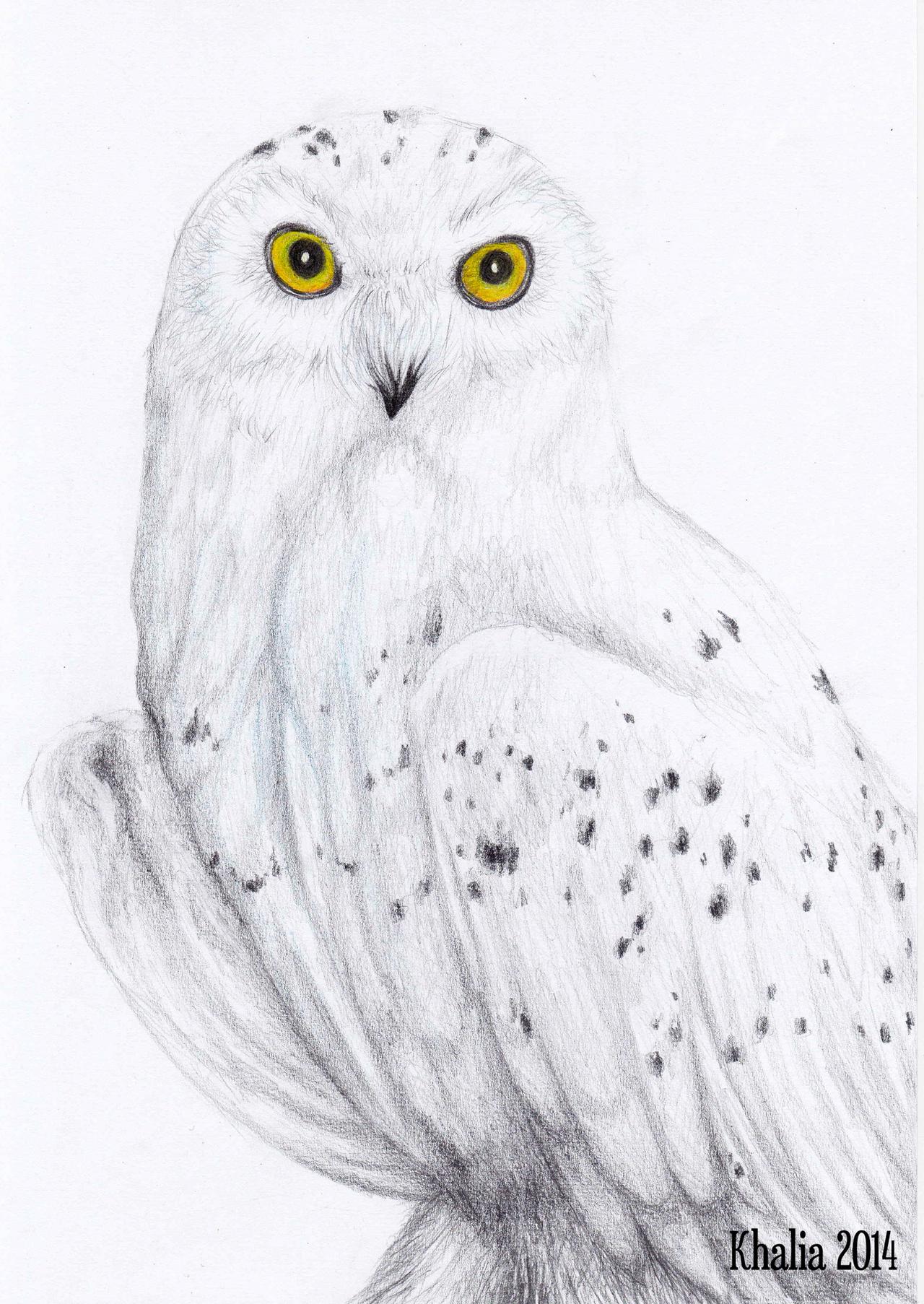 Snowy Owl Drawing by KhaliaArt on DeviantArt