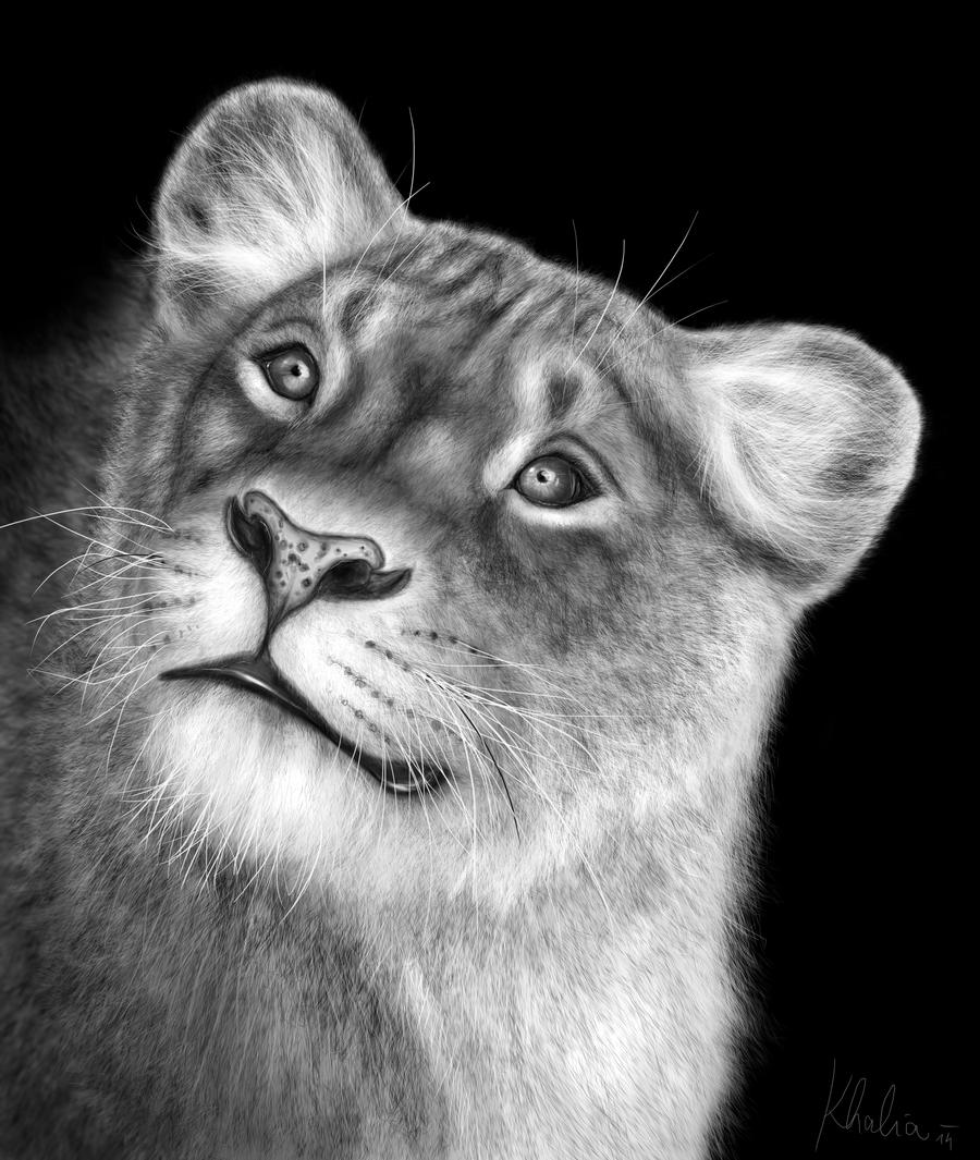how to draw a realistic lioness