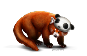 Red Panda with panda beanie by KhaliaArt