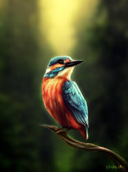 Kamiote the Kingfisher