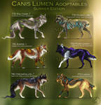 Closed/ Canis Lumen Adoptables - Summer Edition