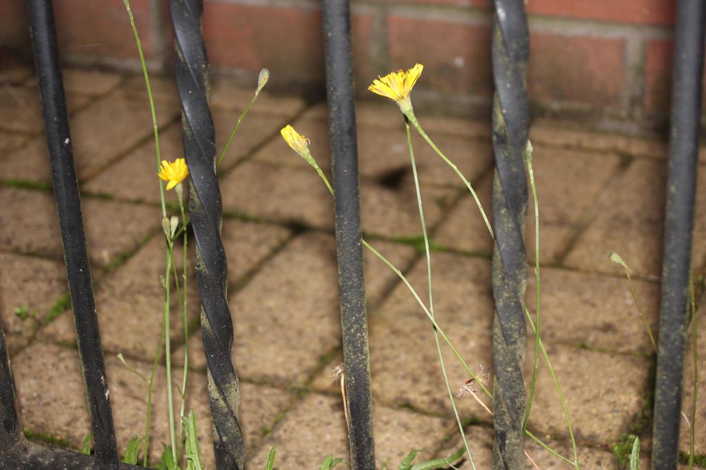 Yellow by Solar-Starfish