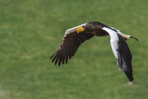 Bird032 by ov3