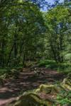 Landscape068