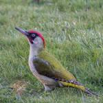 Bird055 by ov3