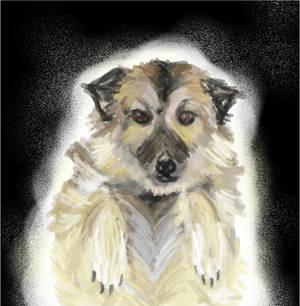 my Forever Dog