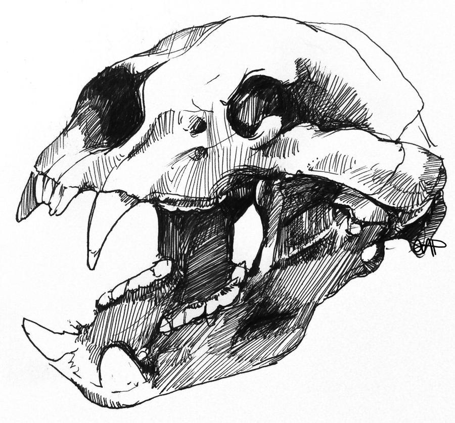 Bear Skull by yolque on DeviantArt