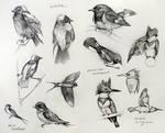 Bird Studies 1