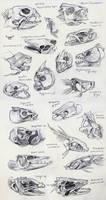 Fish Skull Studies