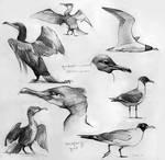 Bird Studies 3