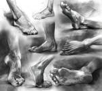 Anatomy Foot Studies 2016