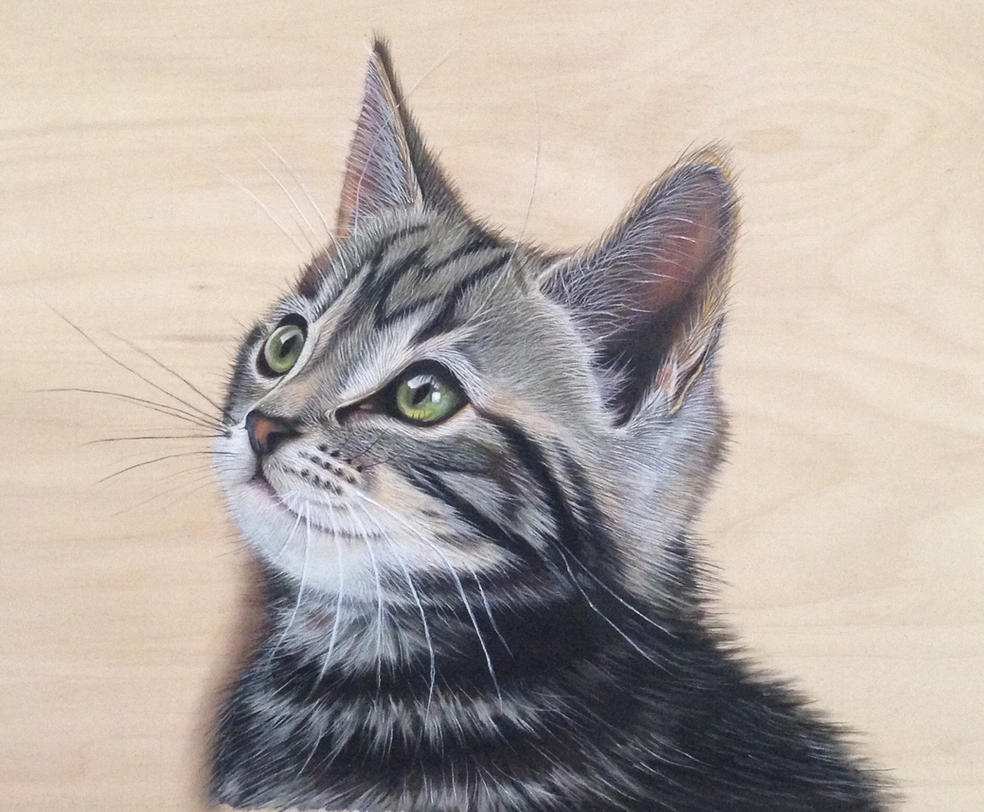 Cat drawing. by ivanhooart