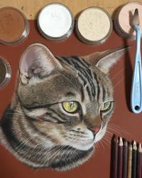 Danwon the cat by ivanhooart