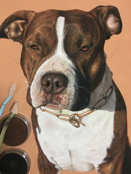 Eros the American staffordshire terrier