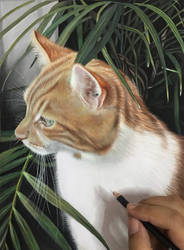 Max the ginger tabby cat