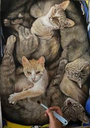 Kitty pile
