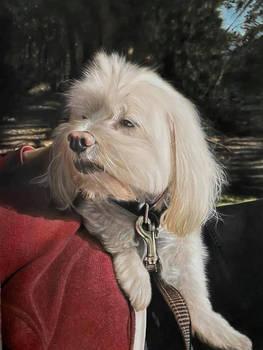 Commission pet portrait painting