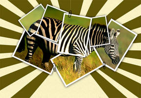 zebra by PashaSade