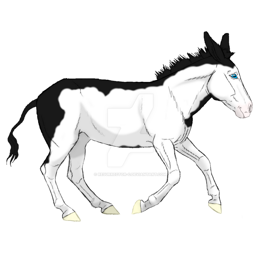 Frame Overo Donkey by resurrector-c