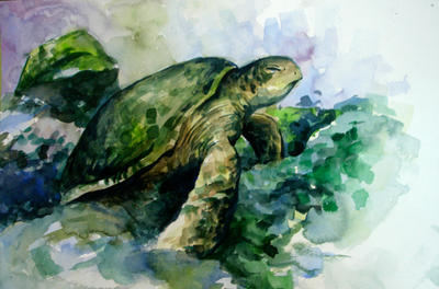 turtle - water colour by Seanleedesign