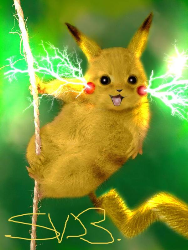 Real Life Pikachu Pokemon Images | Pokemon Images
