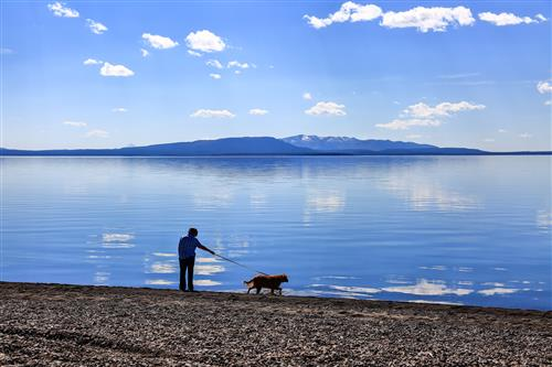 Dog walker along Butte lake, Yellowstone NP by boradaphotography