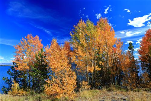 Fall colors at Yellowstone NP by boradaphotography