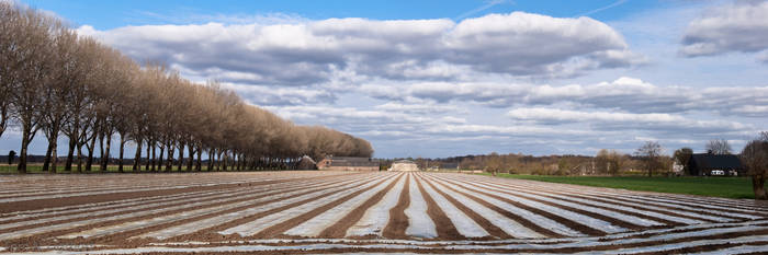 The corn has been seeded II by TomNL