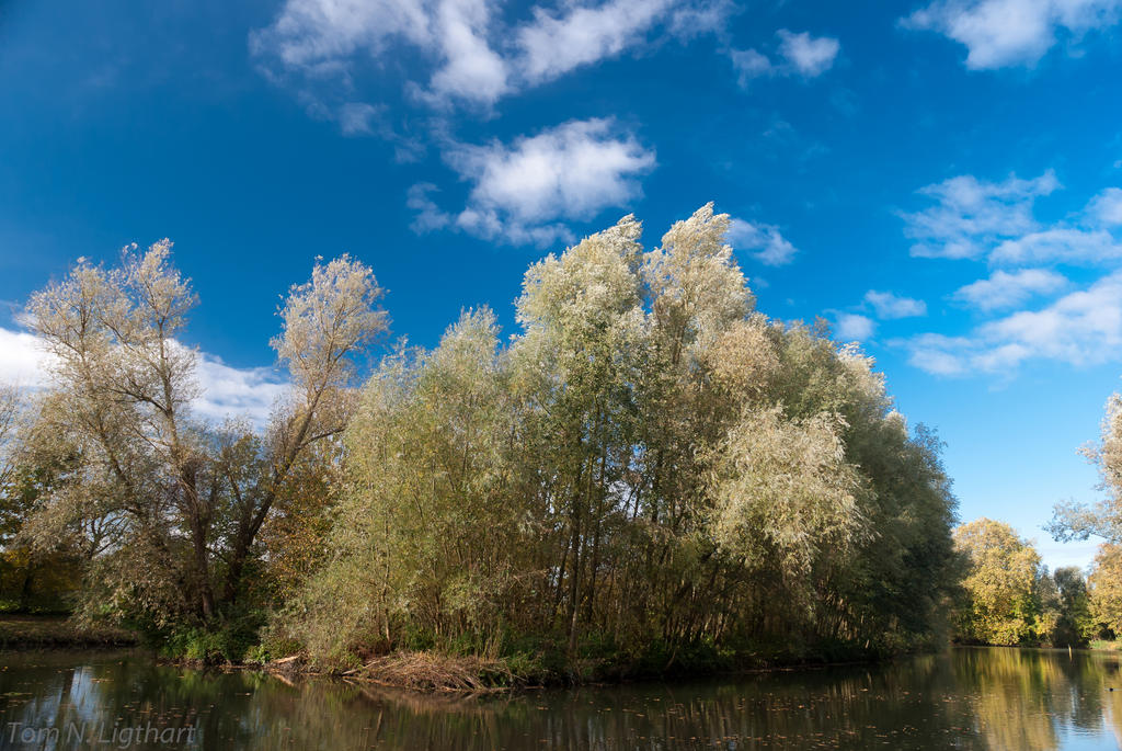 Willows feeling autumn by TomNL