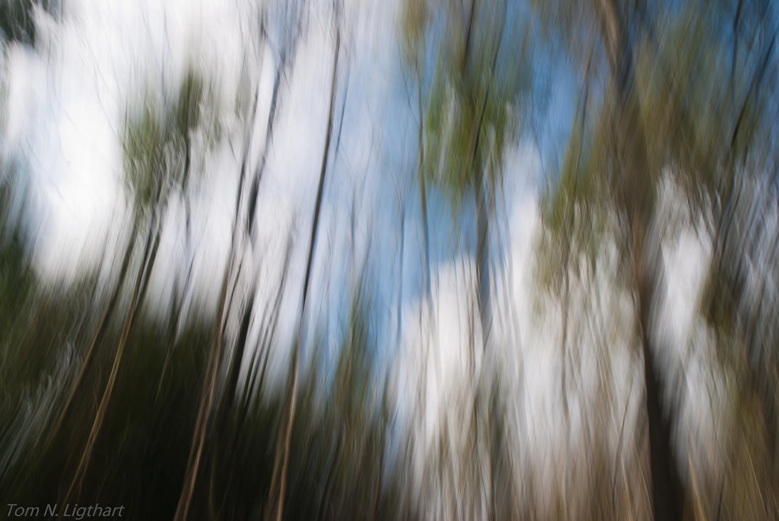 Forest in motion IV by TomNL