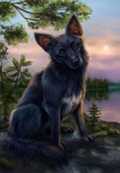 Seskar dog (commission) by Anirysel