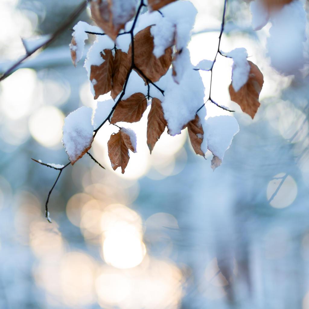 leaf by minipliman