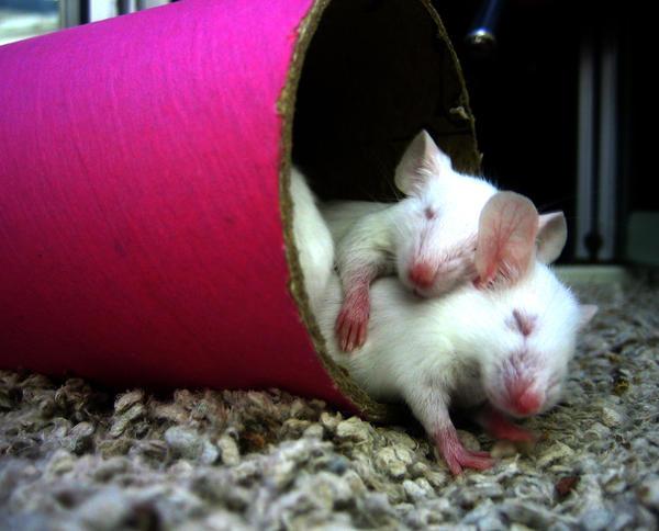 cuddle by georgeROCKSme