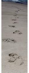 Footprints... by GrowingUpNextMonday