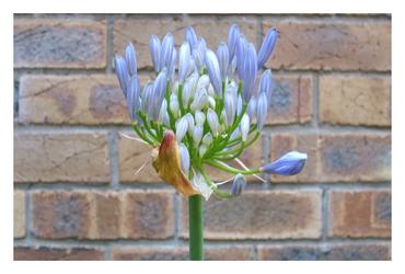 Flowering Love by GrowingUpNextMonday