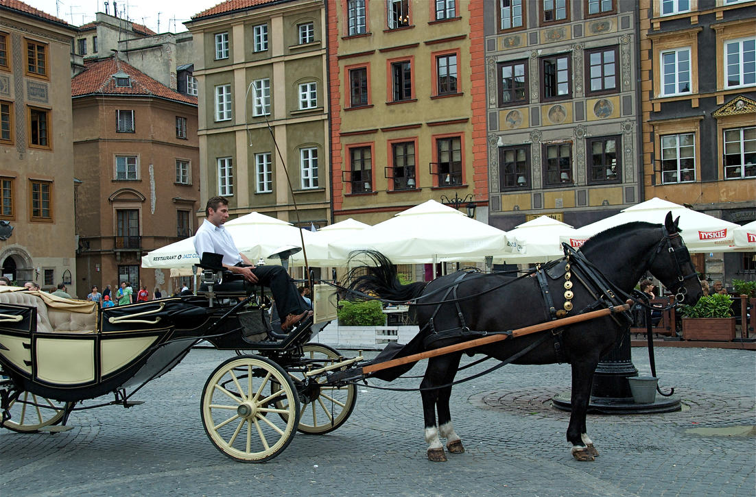 Warsaw cab horse 5 by rennied on DeviantArt