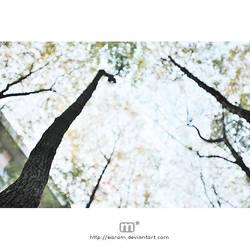i wait for my autumn ii