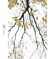 i wait for my autumn iii