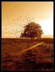 Wind by Nasol