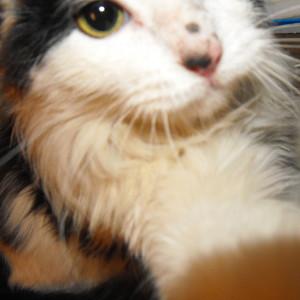 Kaesa's Profile Picture