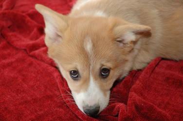 Puppy Love by MommaWookiee