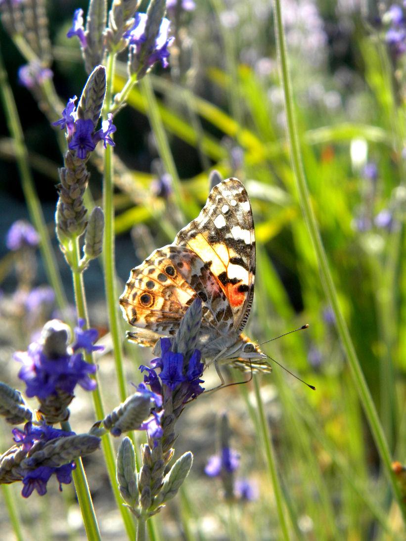 Secret Spring by NatureRaven